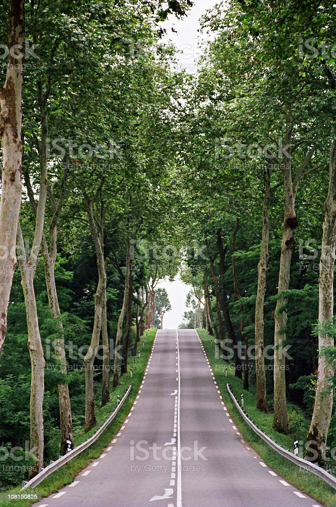Country Road with Trees Along It royalty-free stock photo