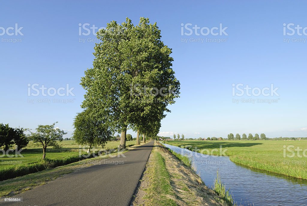 Country road with trees and ditch royalty-free stock photo