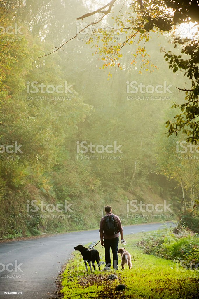 Country road, young man walking with two dogs on leashes. stock photo