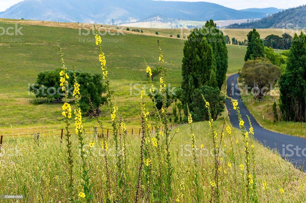 Country roadside flowers. Rural roadside. stock photo