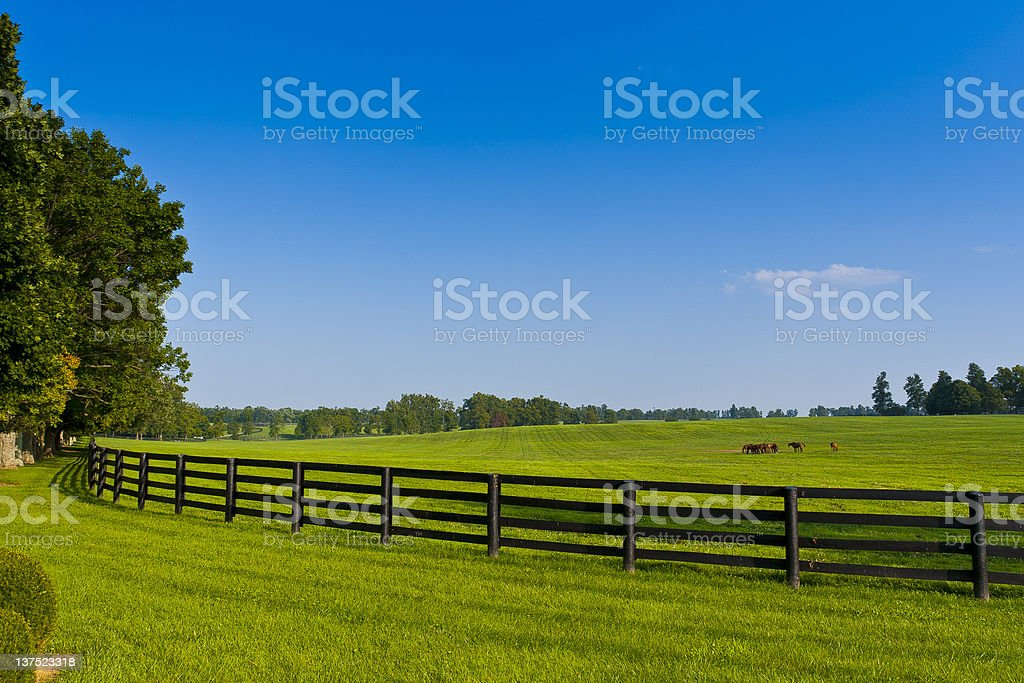 Country scenery with brown fence in the summer stock photo