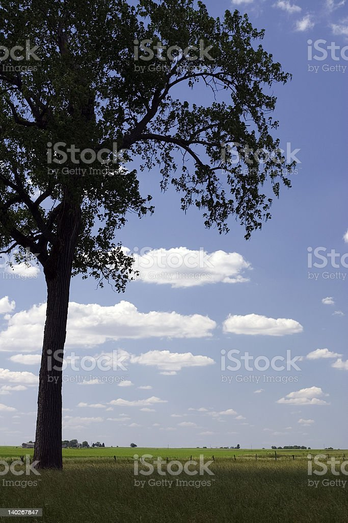 Country Shade stock photo