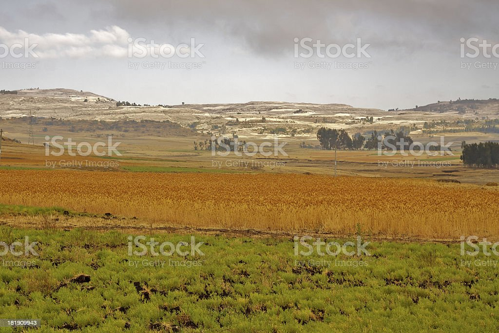 Country side in Oromia Region royalty-free stock photo