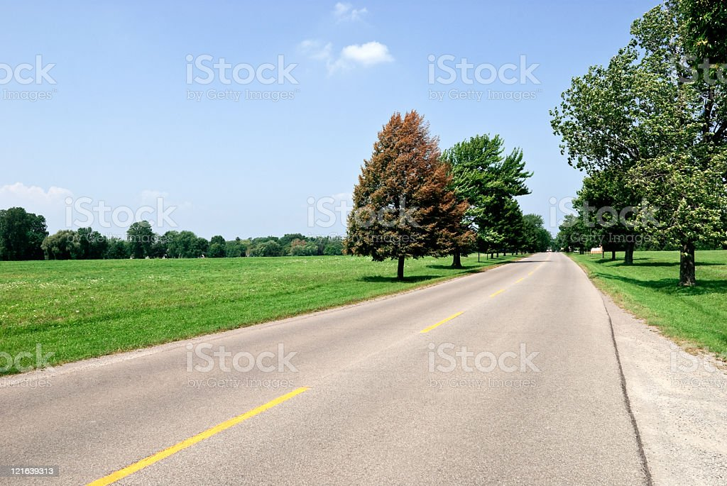 Country side road with trees royalty-free stock photo