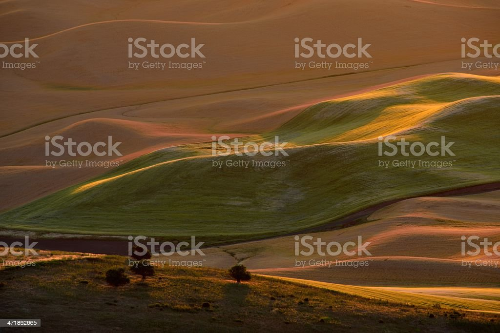 Country side wheat field and Hills at sunrise stock photo