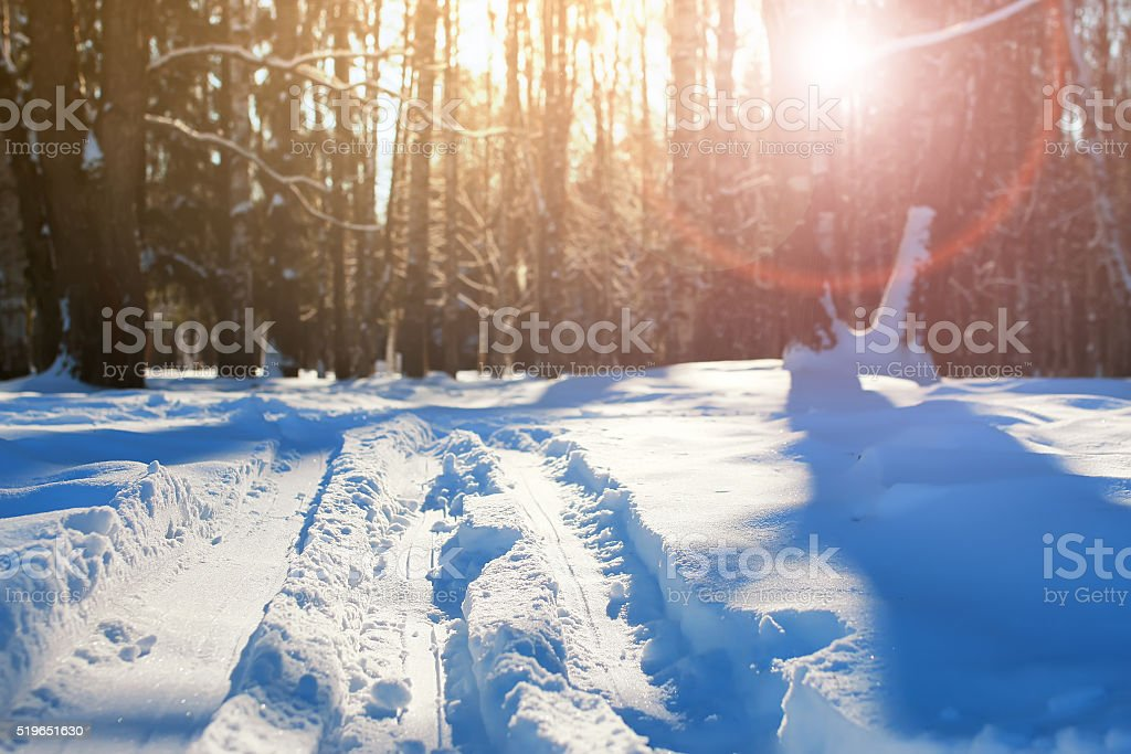 country skiing in the winter forest stock photo