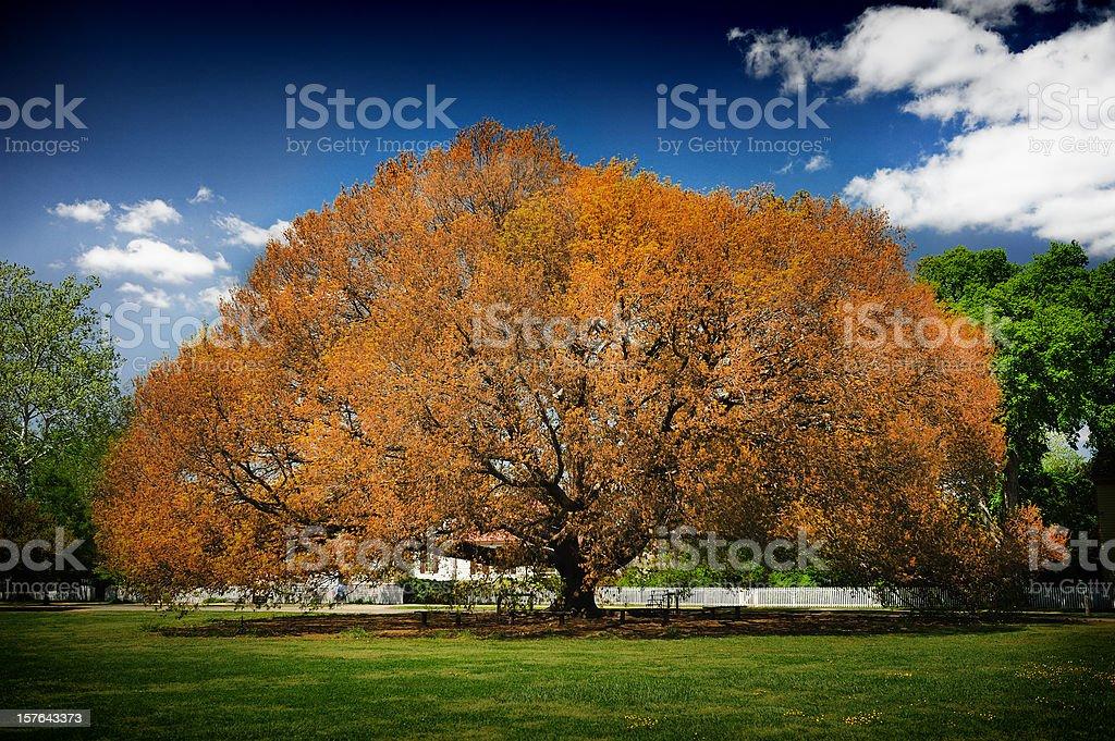 Country Tree royalty-free stock photo