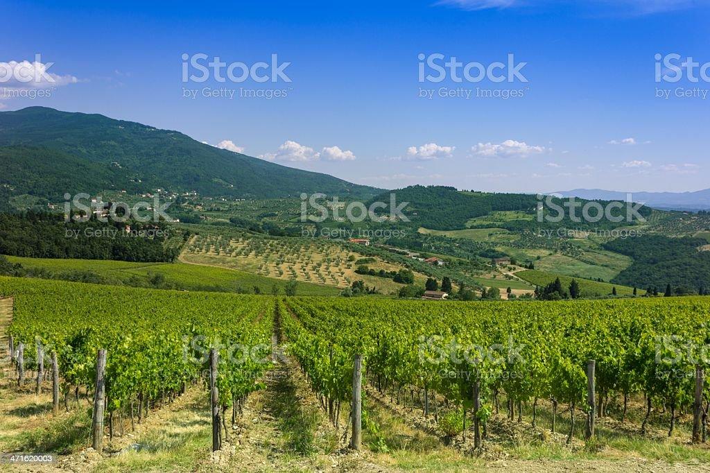 Country Vineyard stock photo