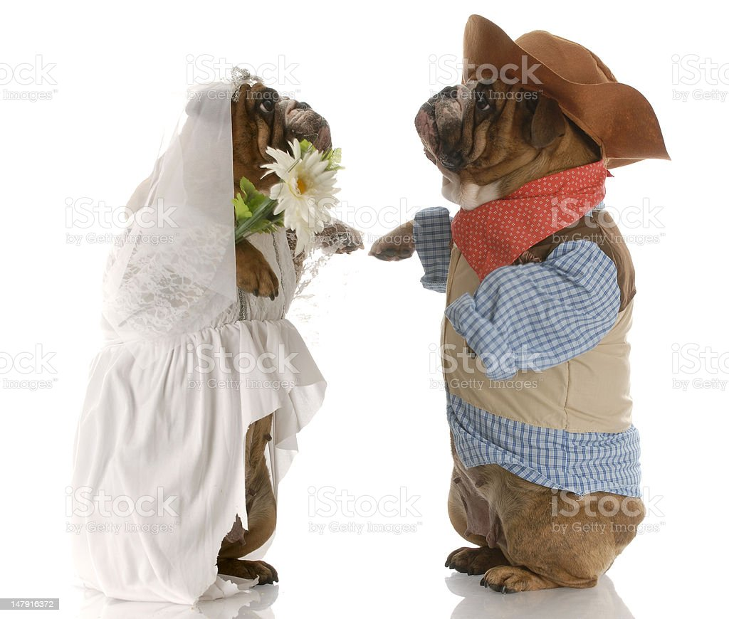 country wedding royalty-free stock photo