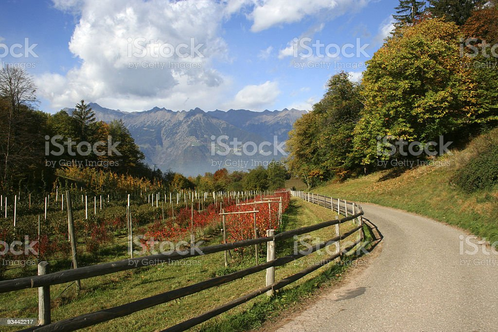 Countryroad and vineyards with mountains as background Nobody royalty-free stock photo