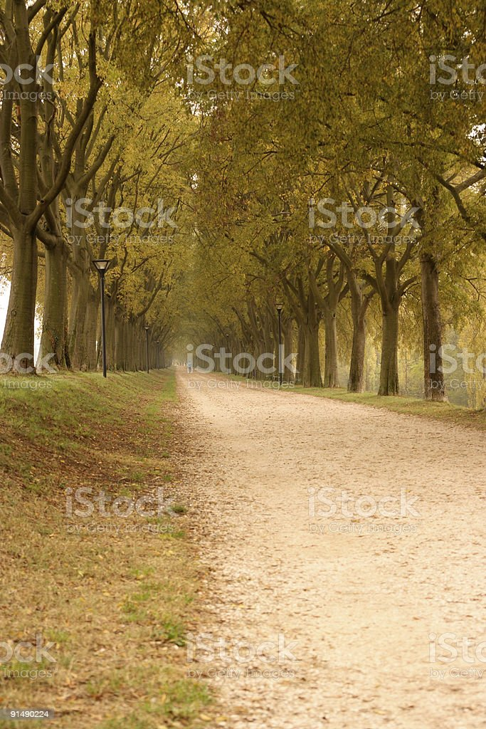 Countryroad in autumn royalty-free stock photo