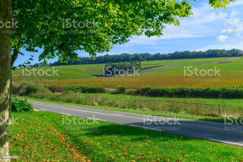 Countryside and vineyards in Chablis area stock photo