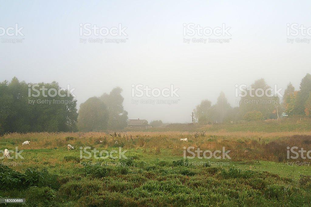 Countryside, fog, autumn royalty-free stock photo