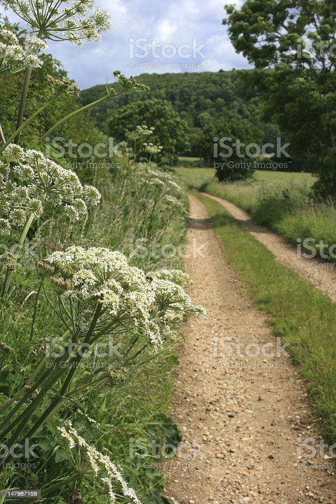 Sentier de la campagne, Dorset, en Angleterre photo libre de droits
