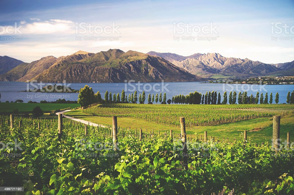 Countryside In New Zealand Beautiful Scenery Natural Concept stock photo
