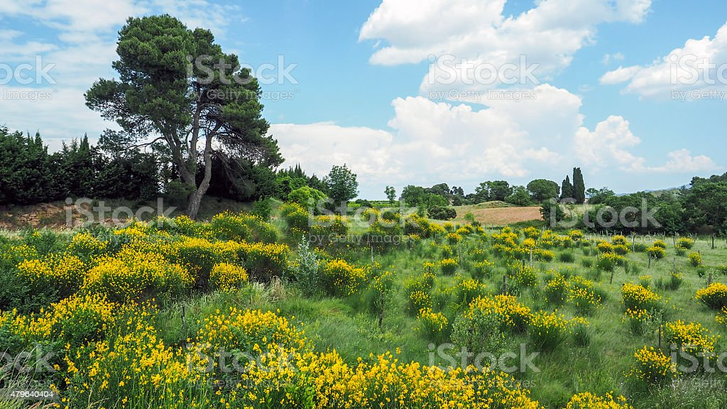 Countryside in the Pyrenees in France stock photo