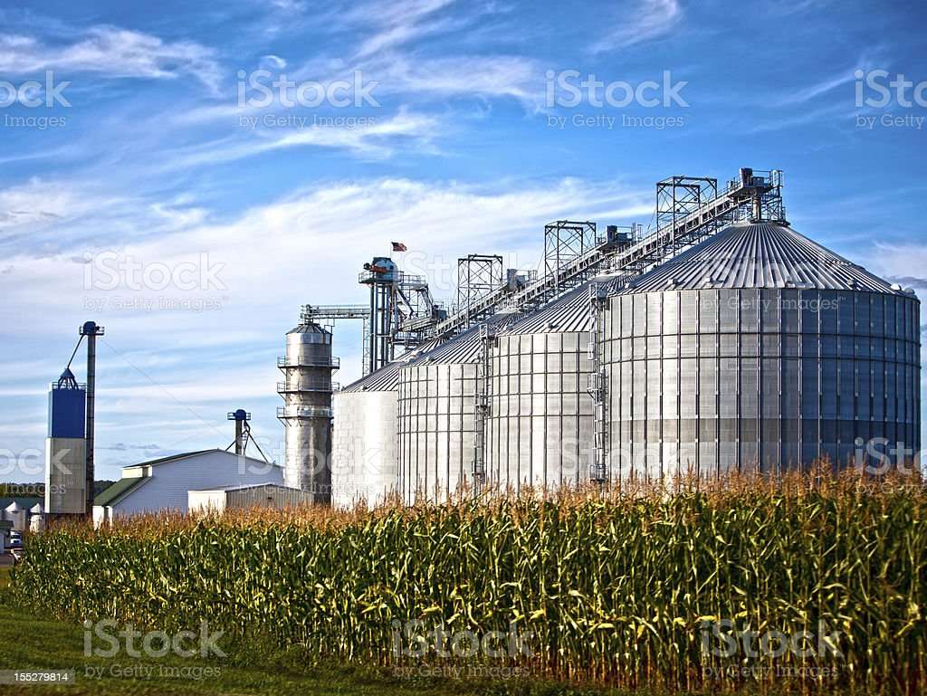 Countryside landscape of metal silos behind a corn field stock photo