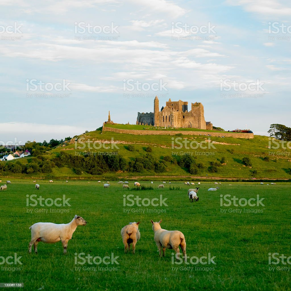 Countryside landscape of Rock of Cashel with sheep stock photo