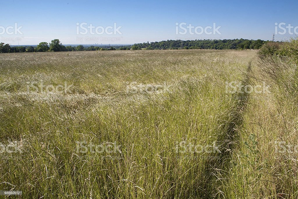 Countryside meadow stock photo