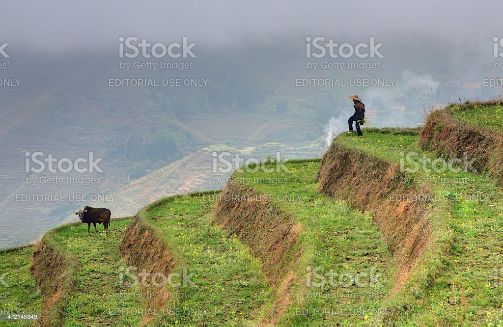 Countryside, mountain landscape, lonely rural shepherd in rice terraces stock photo