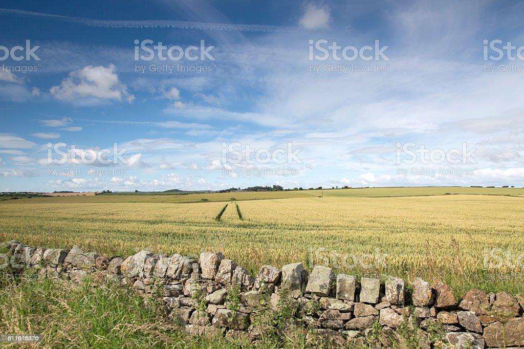 Countryside outside Bamburgh, Northumberland stock photo