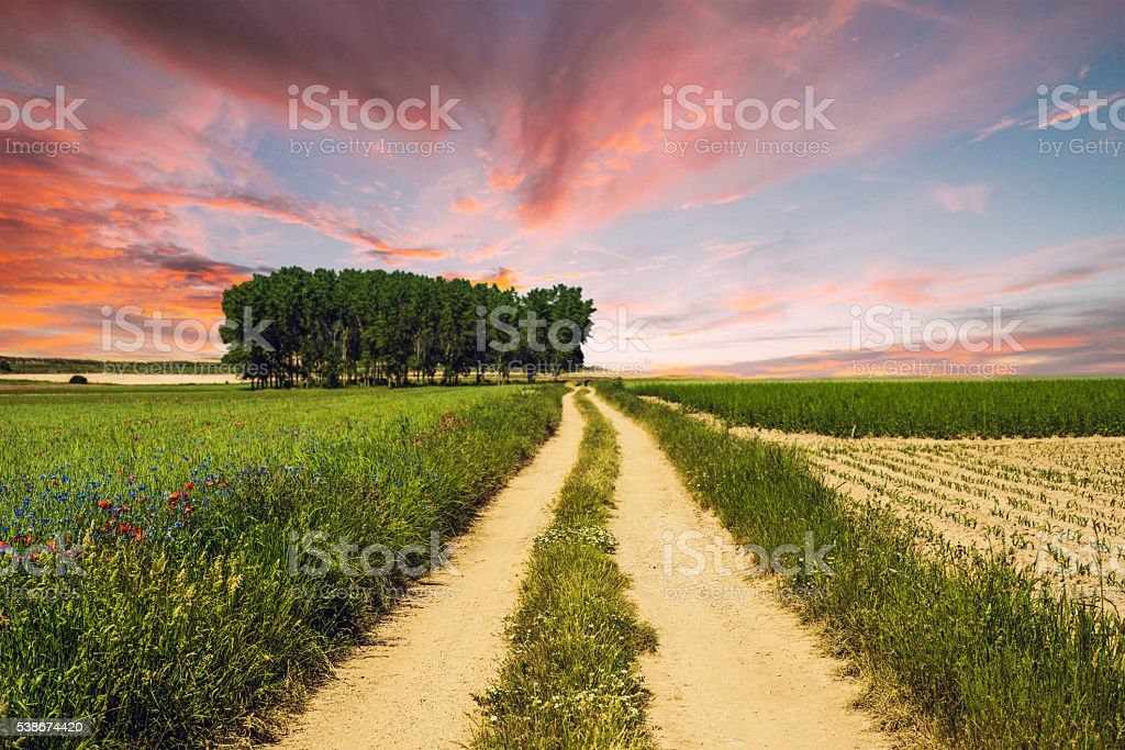 Countryside path at sunset stock photo