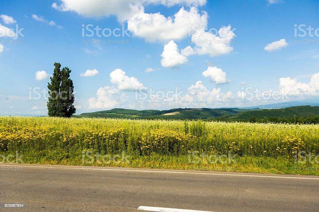 Countryside Prairie Road stock photo