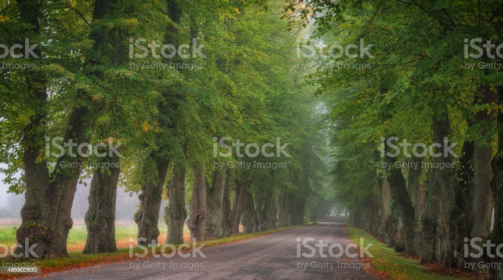 Countryside road between large trees stock photo