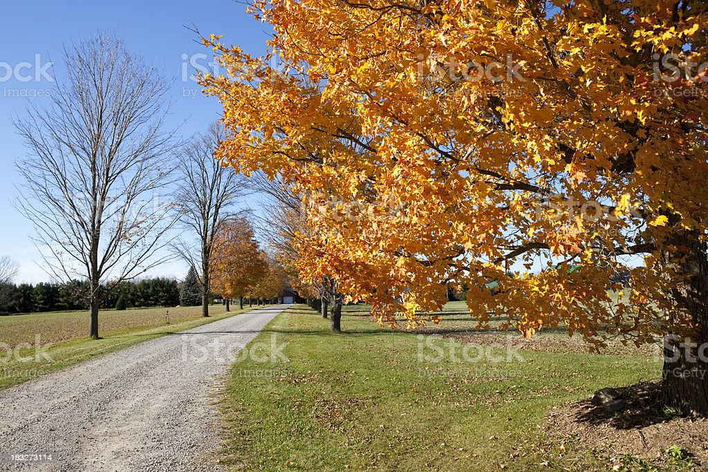 Countryside Road During The Autumn royalty-free stock photo