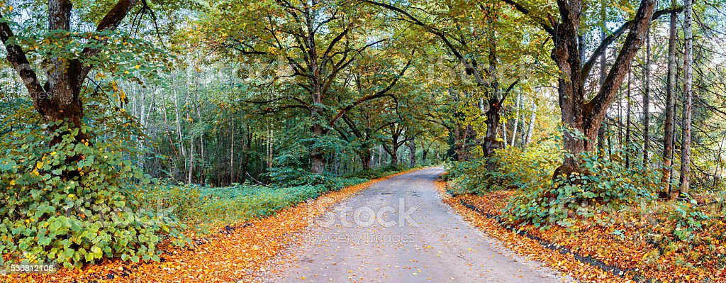 Countryside road in autumn stock photo