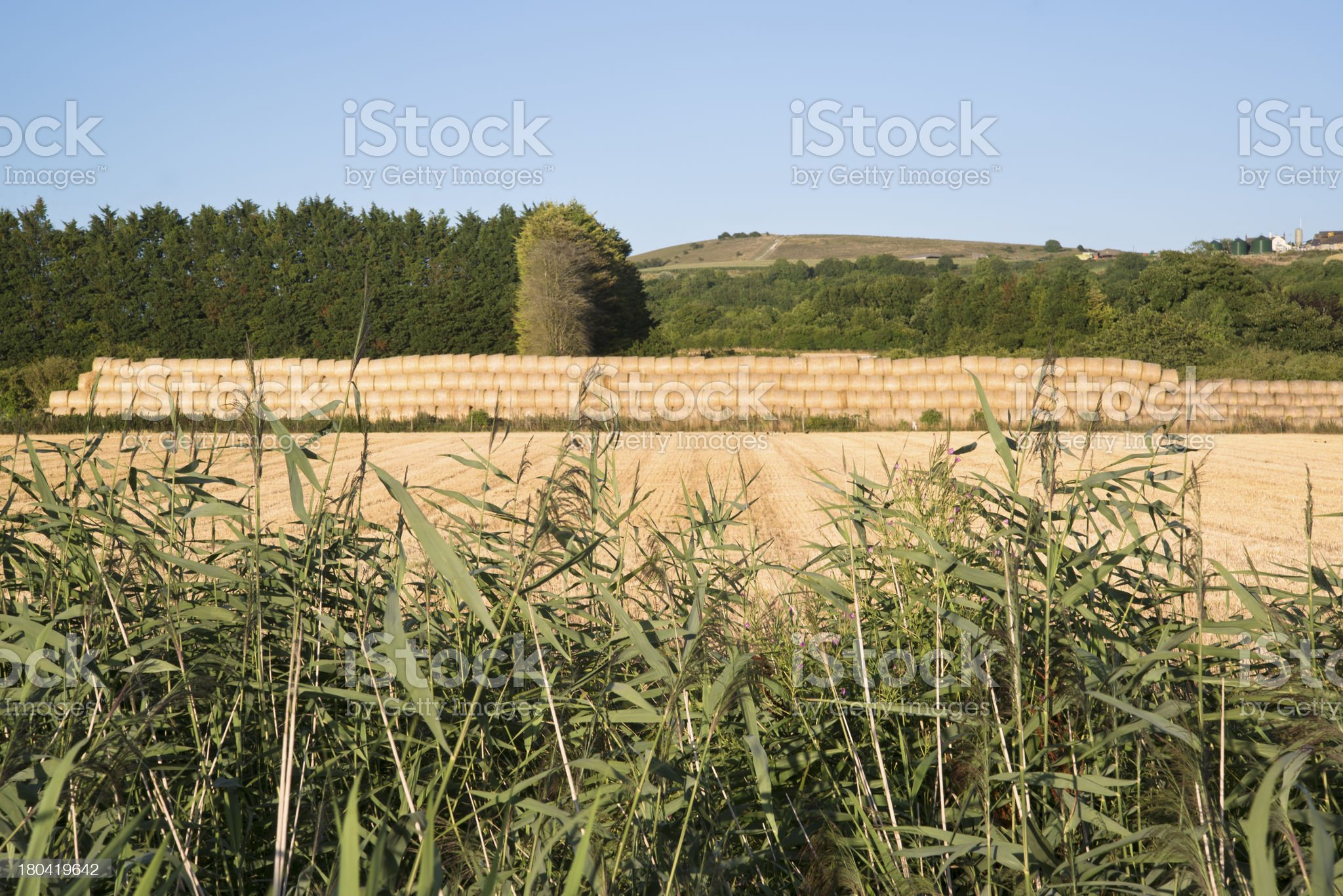 Countryside Summer landscape field of hay bales royalty-free stock photo