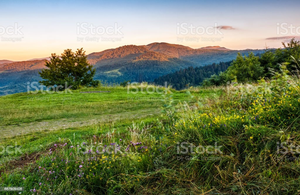 countryside summer landscape with field, tree and mountain ridge stock photo