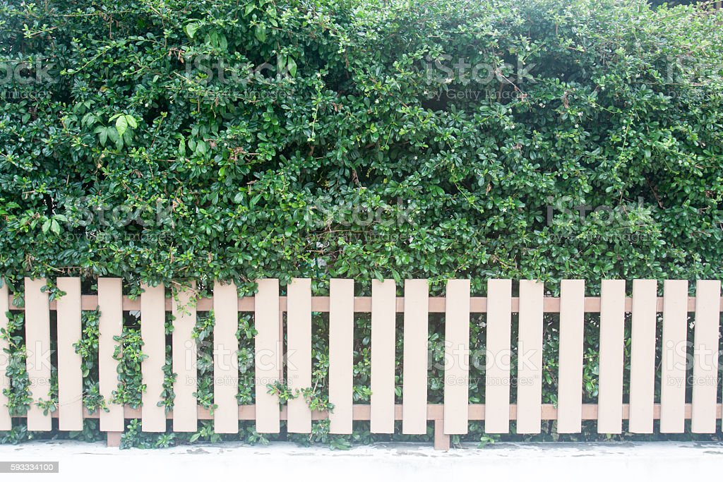 County style long wooden fence stock photo