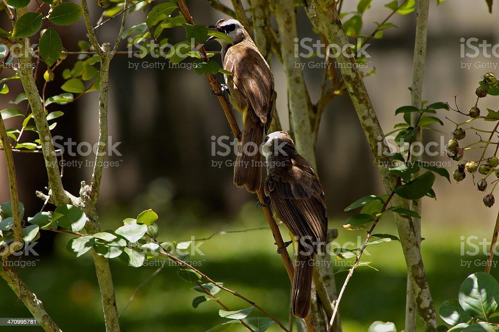 Couple Birds royalty-free stock photo