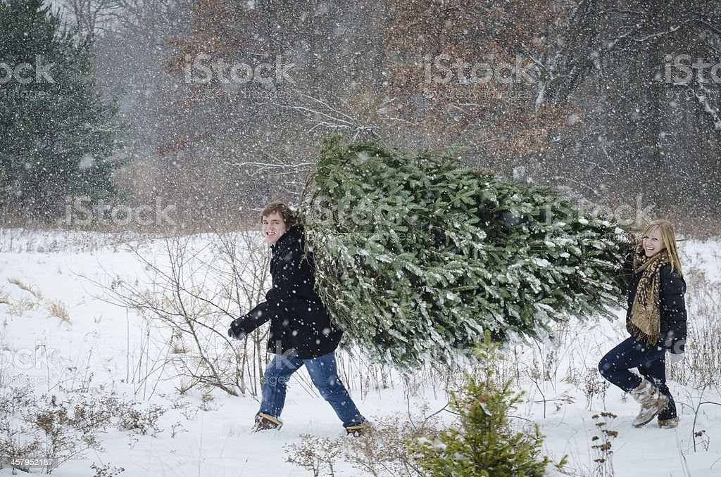 Couple carrying christmas tree stock photo