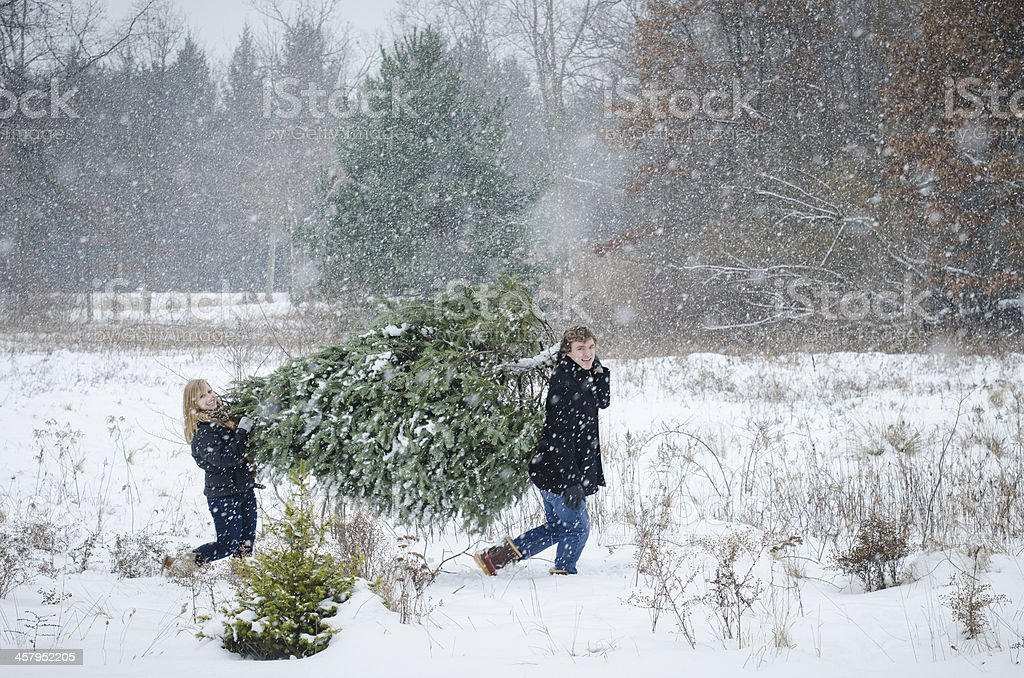 Couple carrying christmas tree stock photo