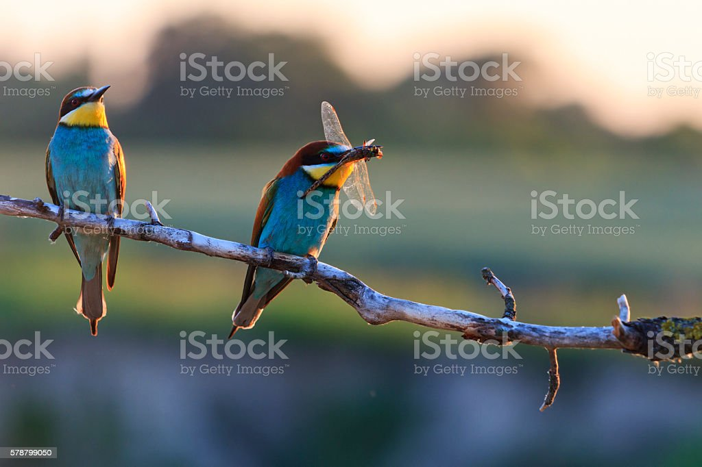 Couple dines colored birds at sunset stock photo