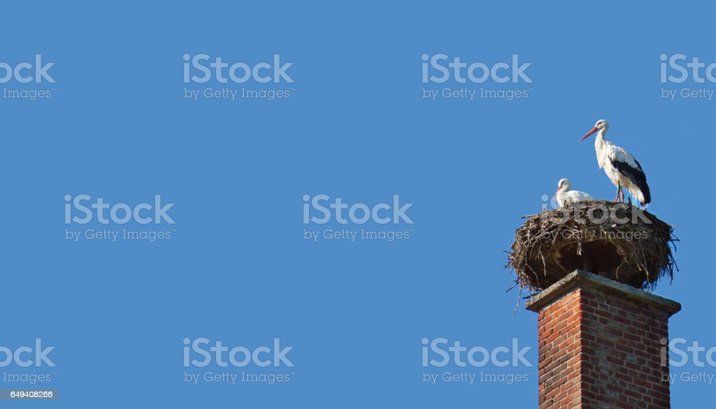 Couple expecting. stock photo