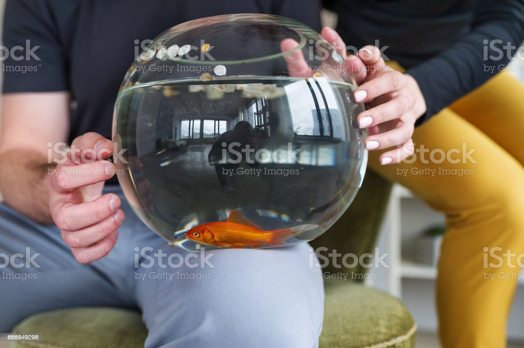 Couple holding goldfish in a fishbowl. stock photo