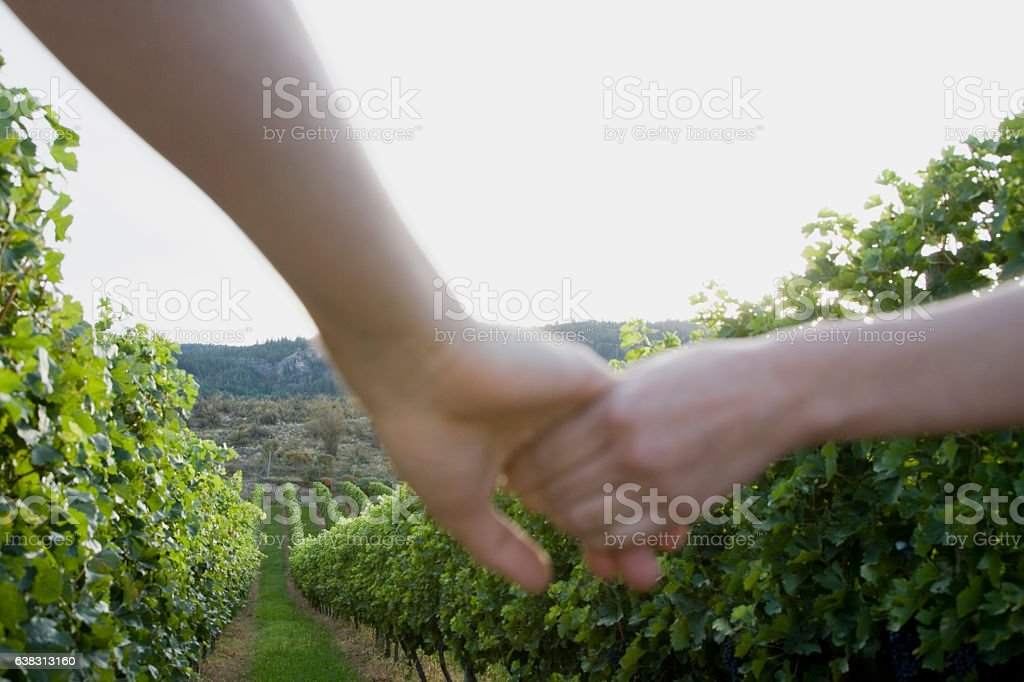 Couple holding hands in vineyard row stock photo