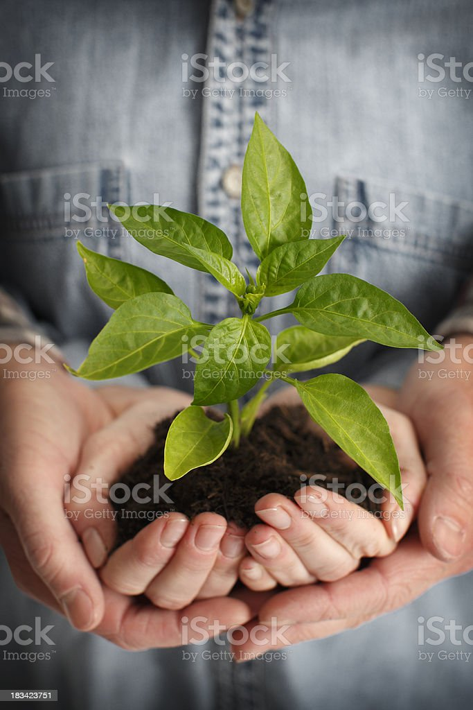 Couple Holding Plant royalty-free stock photo