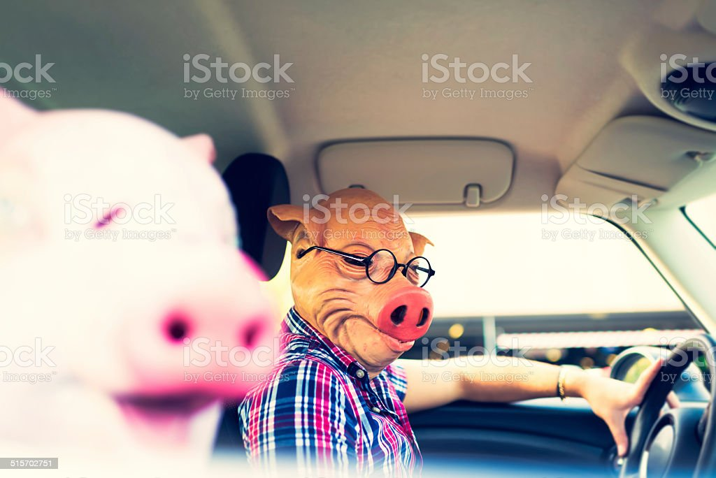 Couple in mask of pigs inside of car stock photo
