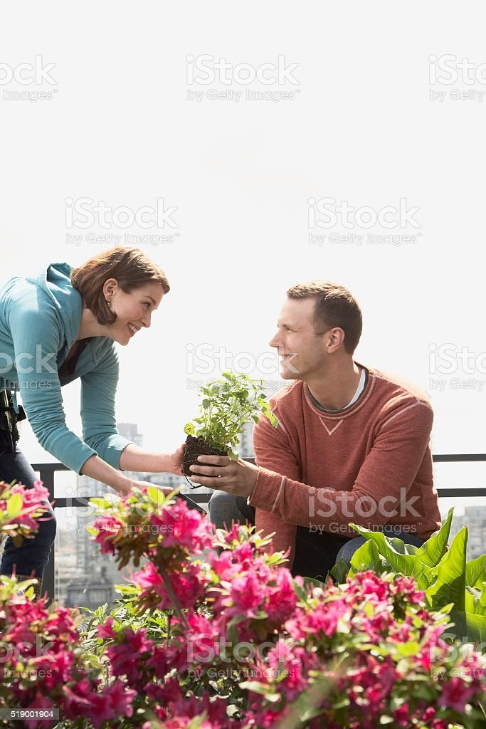 Couple in roof garden stock photo