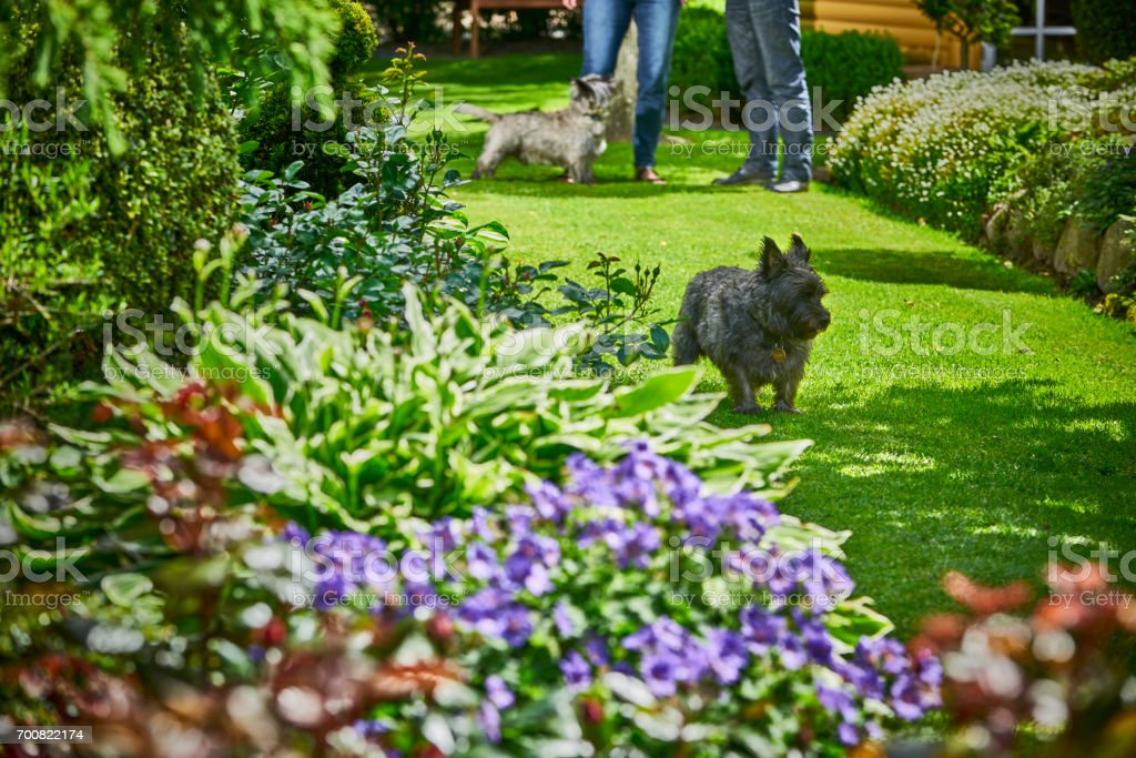 Couple in their garden with their dogs stock photo