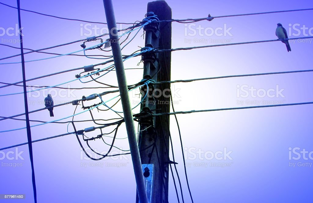 Couple of birds is perched on power cable stock photo