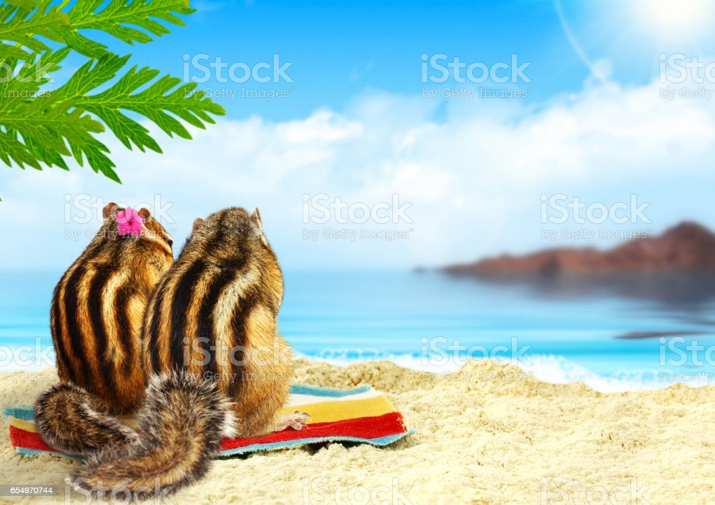 couple of chipmunks on the beach, honeymoon concept stock photo