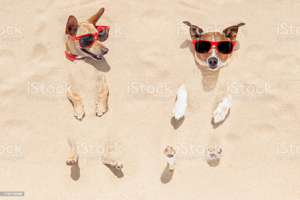 couple of dogs buried in sand stock photo