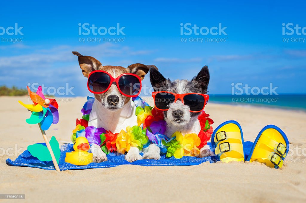 couple of dogs on vacation stock photo