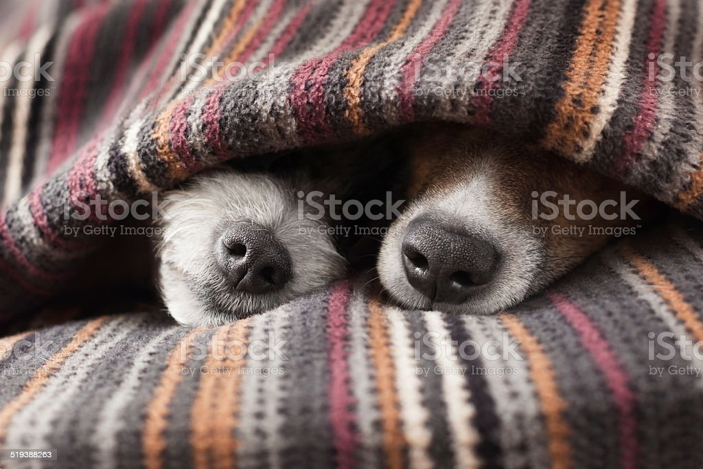 couple of dogs stock photo