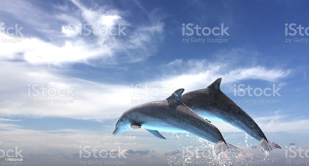Couple  Of Dolphins Jumping Against The Blue Sky stock photo